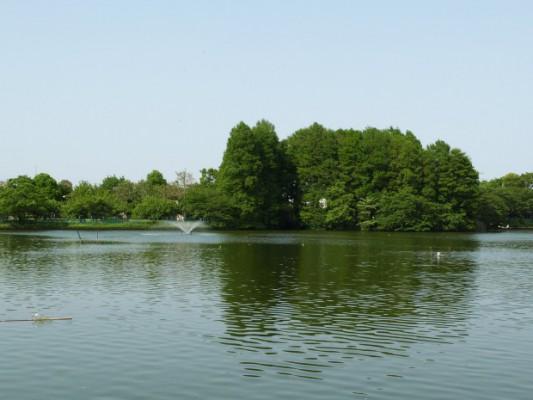 等々力緑地 釣り池